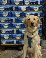 Busch is giving 3 months' worth of beer to people who adopt or foster a dog during coronavirus crisis