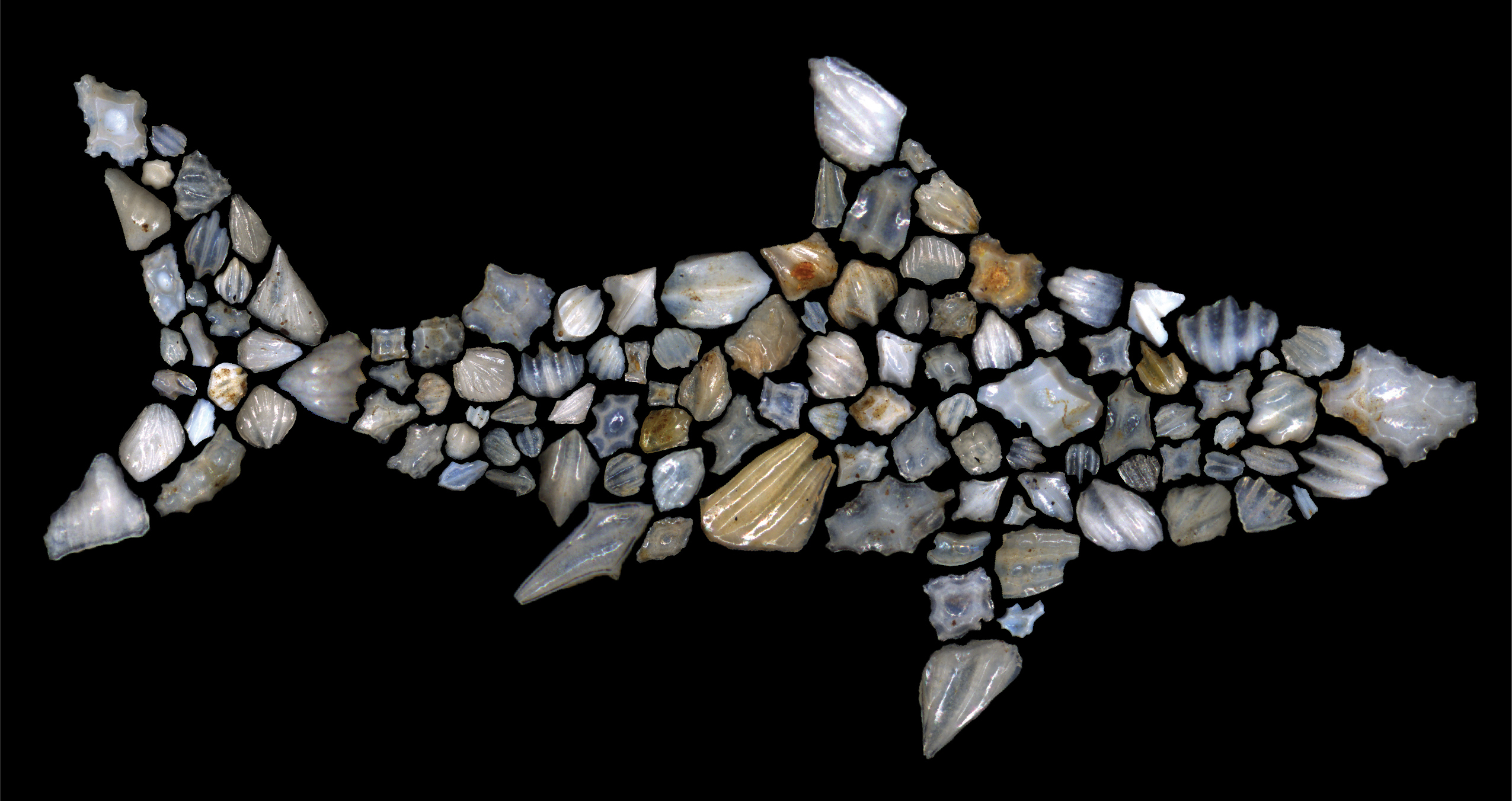 Scientists say 90% of the world's open-ocean sharks died off in mystery extinction event 19 million years ago