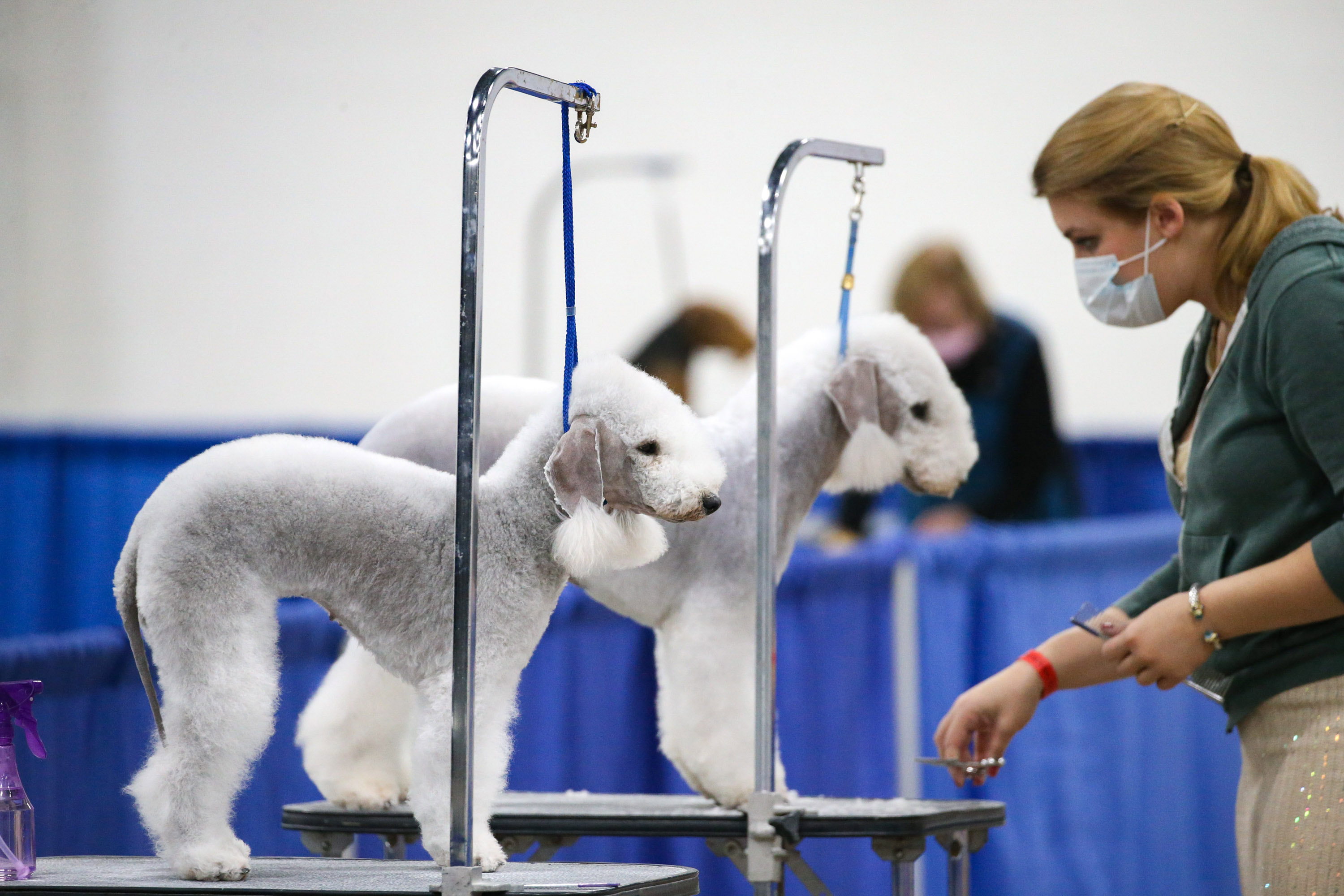National Dog Show 2020: Here's what to know and how to watch