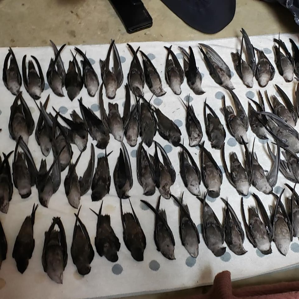 Over 300 migrating birds smashed into Charlotte's NASCAR building