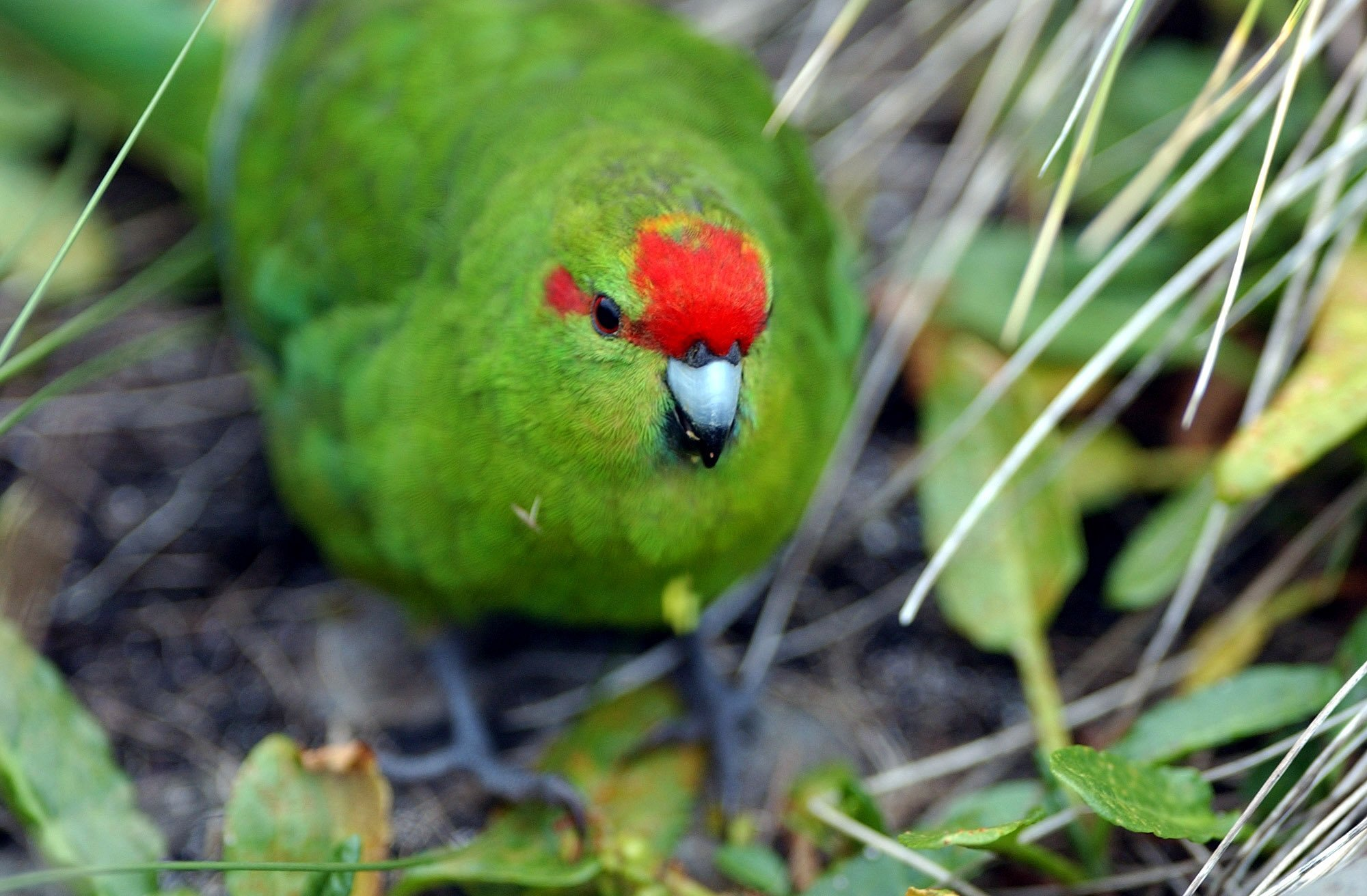 This bird was nearly extinct. Now, its population could double thanks to an 'epic' breeding season