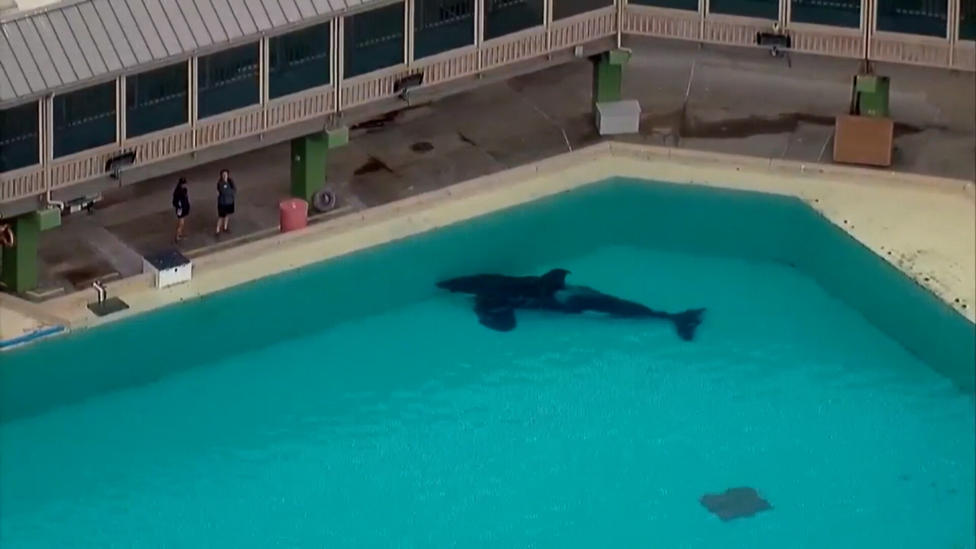 The youngest orca at SeaWorld San Diego just died suddenly