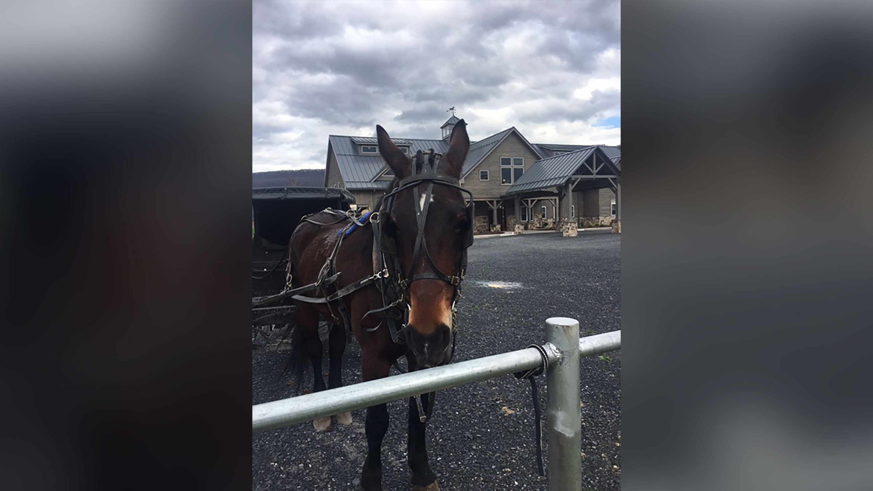 A clinic in Pennsylvania is bringing the Amish drive-through coronavirus testing for their horse and buggies