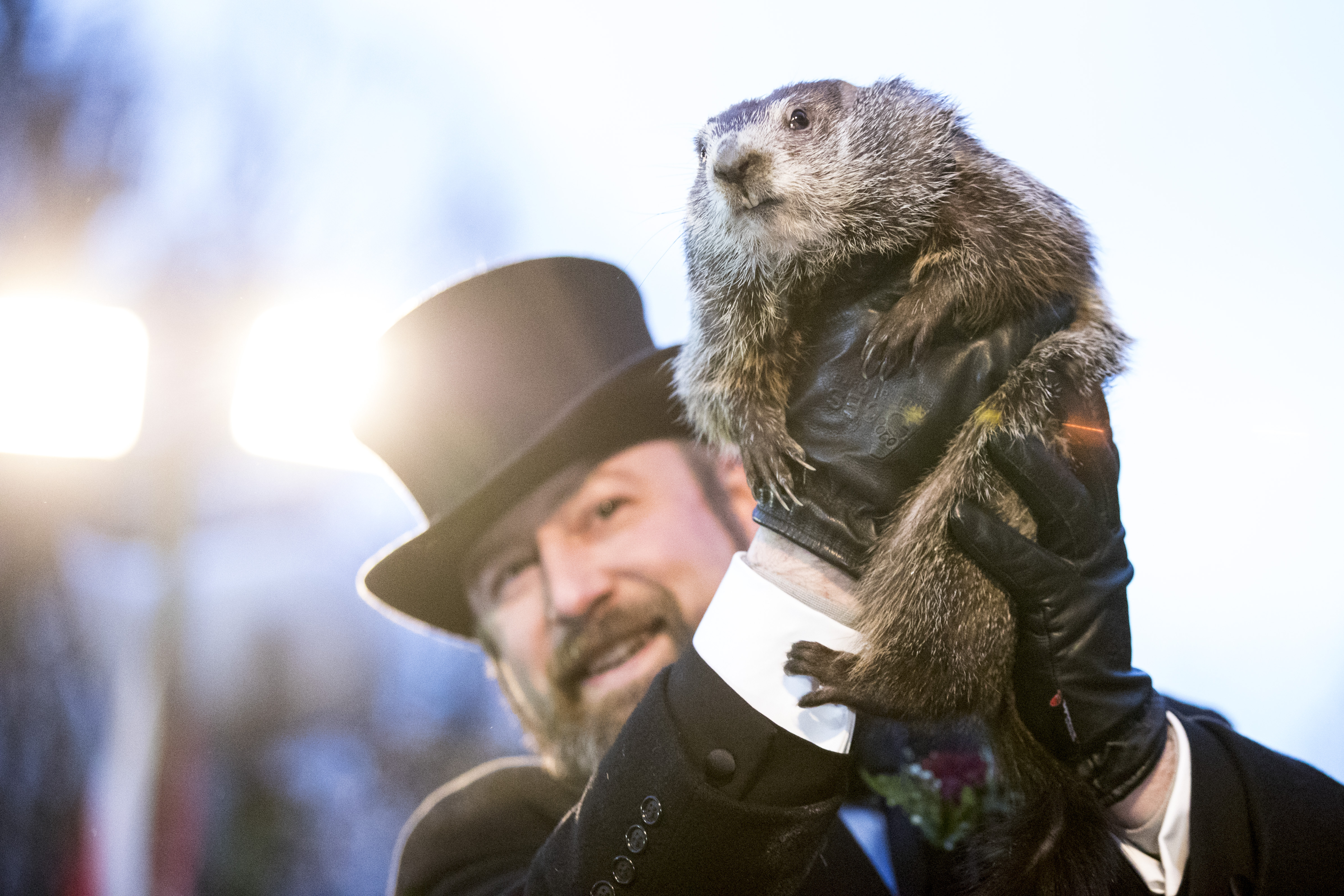 PETA is calling on Punxsutawney Phil to retire and be replaced with an AI groundhog