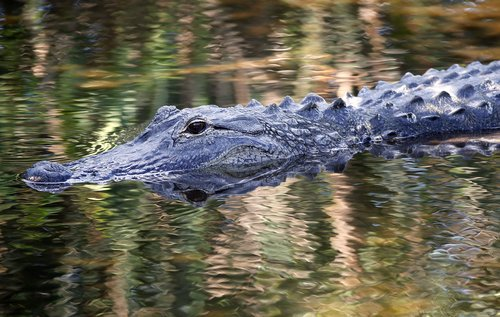 Image for If you flush drugs down the toilet, you could be creating 'meth gators,' police in Tennessee say