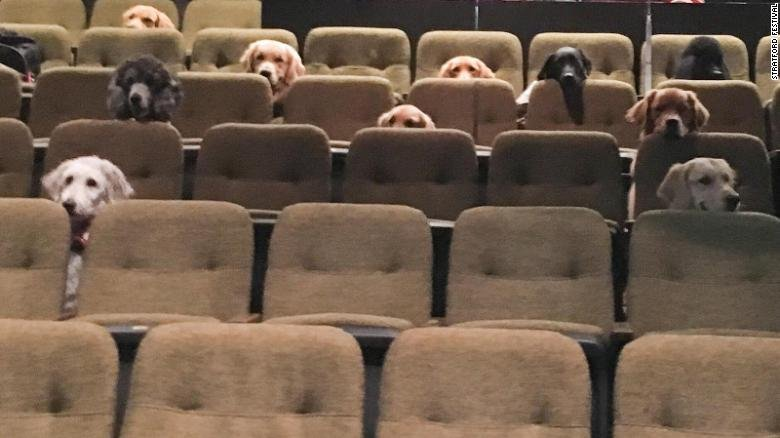 A crew of Canadian service dogs watched a live musical as part of their training