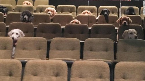 Image for A crew of Canadian service dogs watched a live musical as part of their training