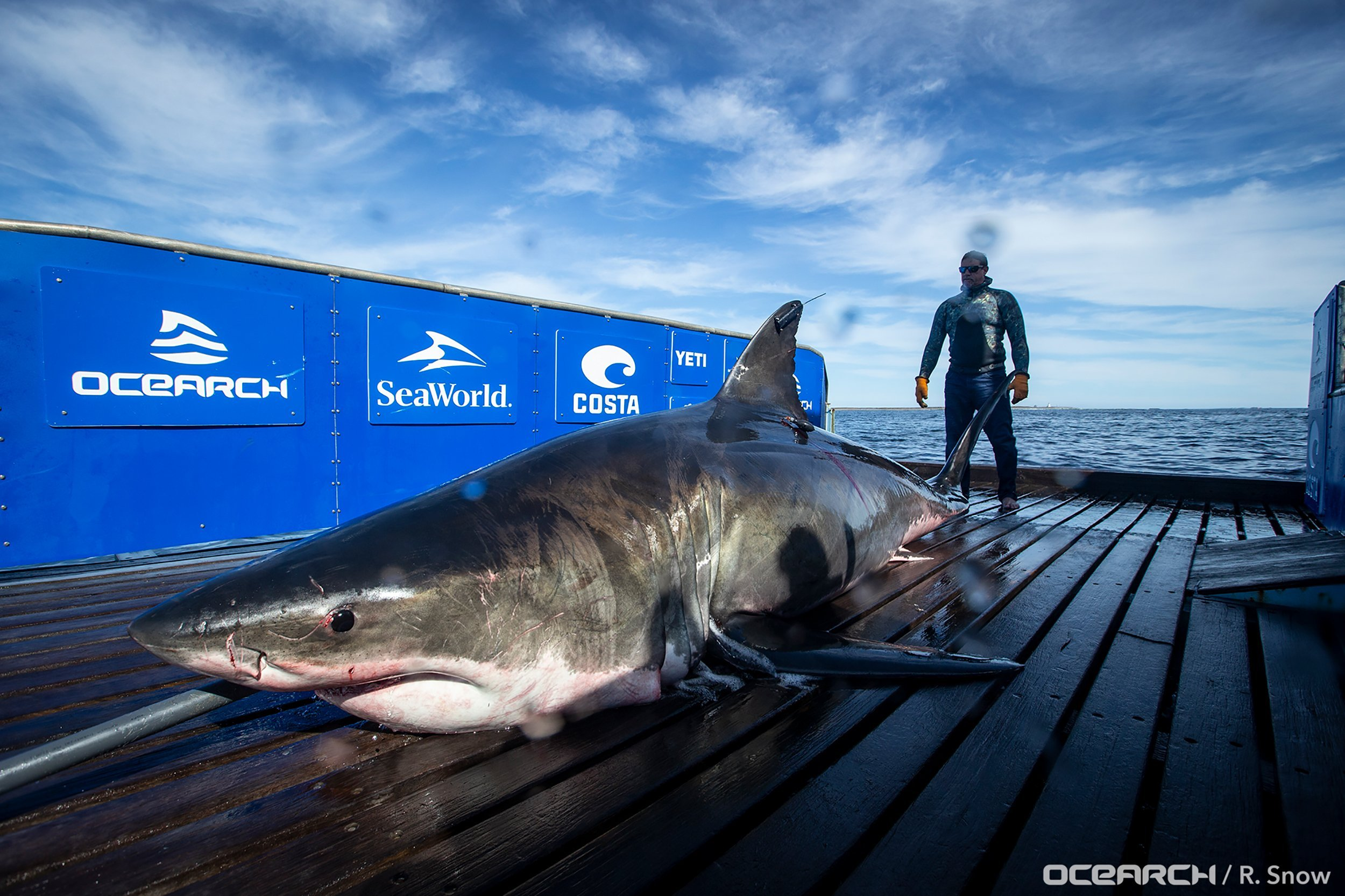 A shark-tracking app showed 6 great whites off Florida's coast. Experts say 'tis the season