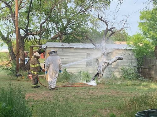 Image for A Texas Man Mowing his Lawn was Killed after he was Attacked by an Aggressive Swarm of Bees