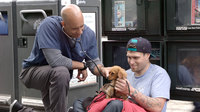 Meet the veterinarian walking around the streets of California and treating homeless peoples' animals for free