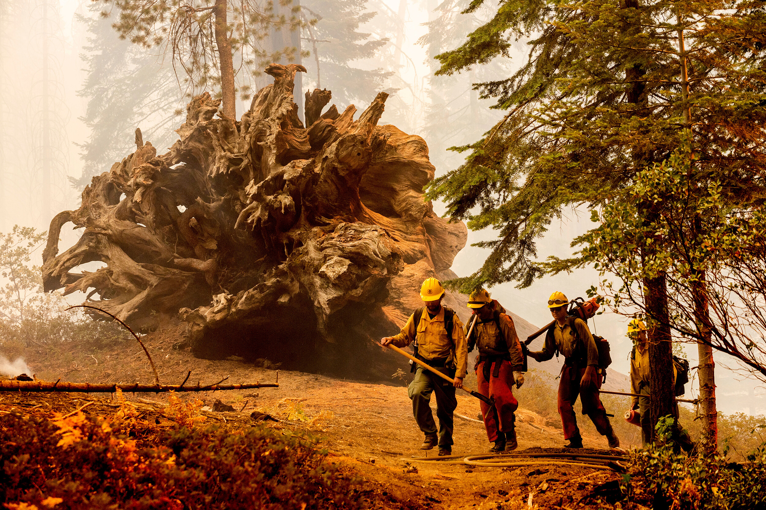 Windy Fire has destroyed more than two dozen giant sequoia trees — and that's just an early assessment