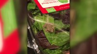 A family found a living frog in a carton of organic salad greens. Enjoy your day