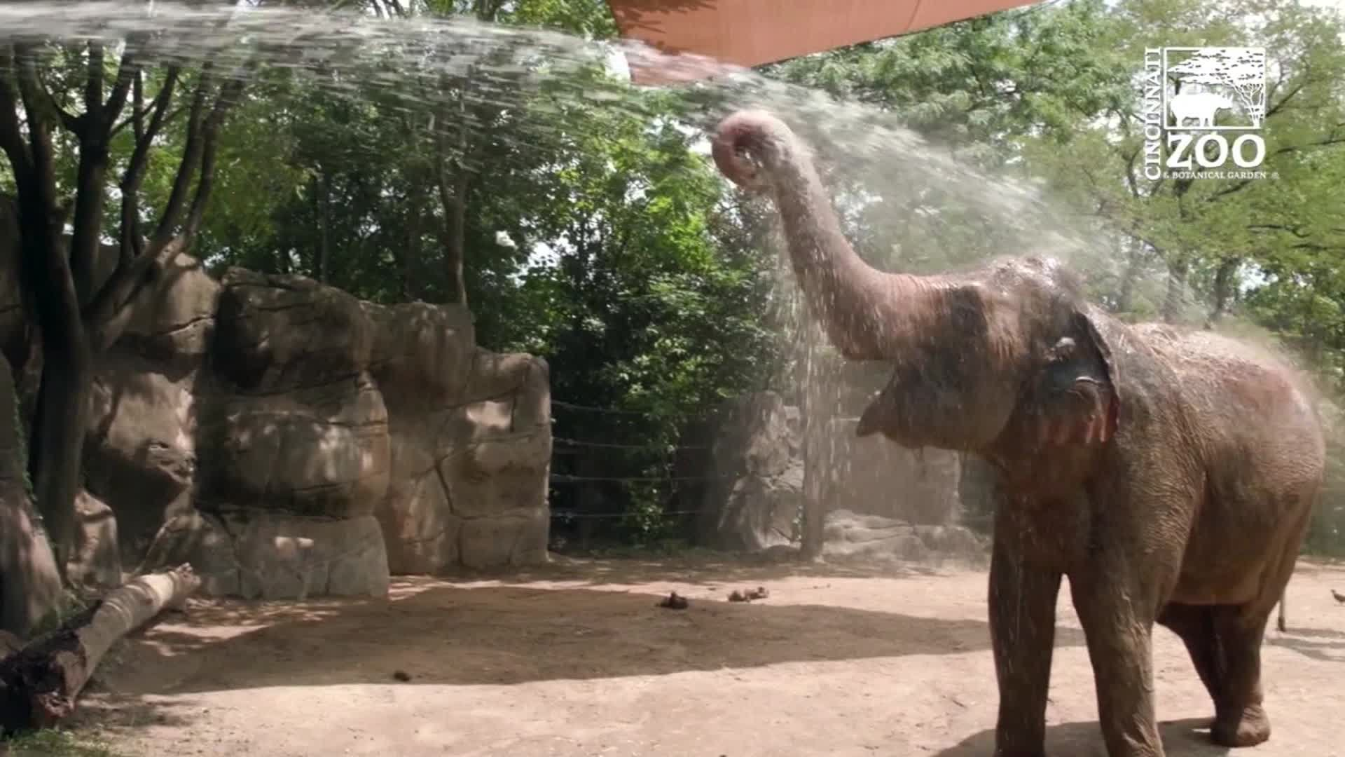 Fish popsicles, elephant hose-downs and ice blocks galore: This is how zoo animals are keeping cool during the heat wave
