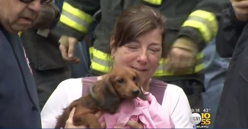 Image for Firefighters stage 2-day rescue to free dog trapped in pipe