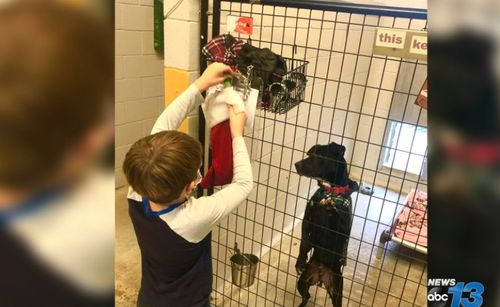 Image for Children fill holiday stockings for dogs at local animal rescue