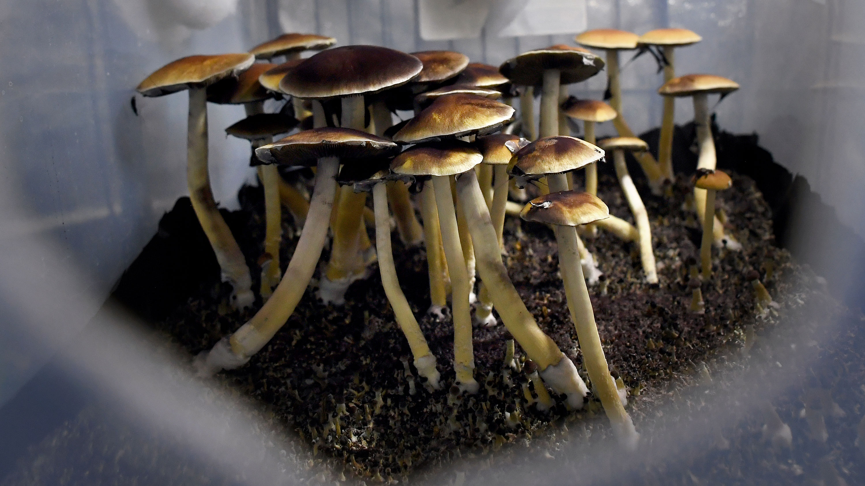 The Canadian government is allowing 4 terminally ill patients to use psychedelic mushrooms to help ease their anxiety