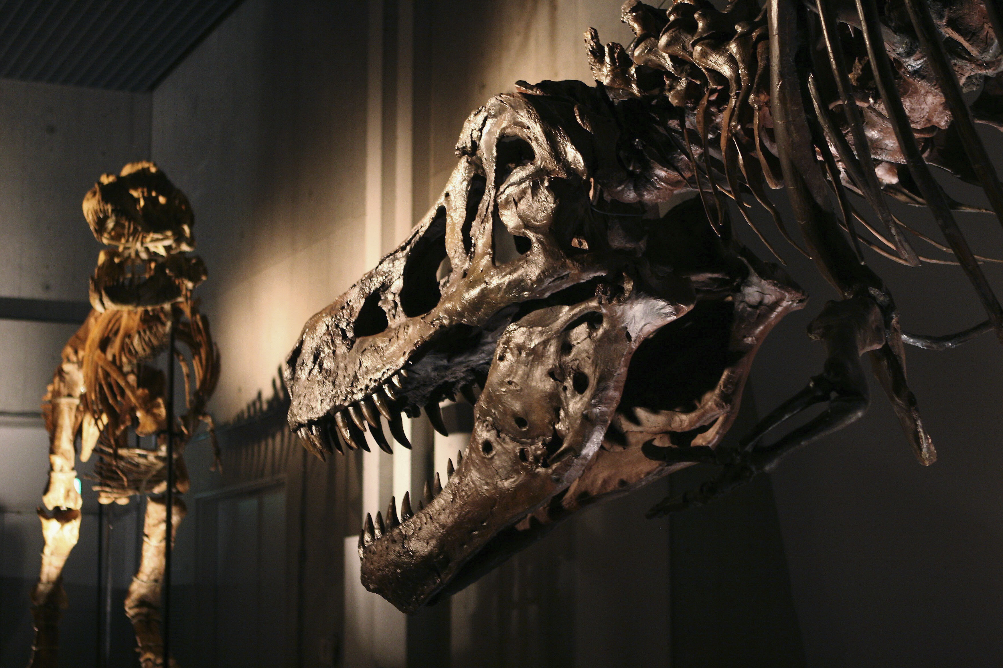 What dinosaur diseases — which might seem familiar — can tell us about how they lived and died