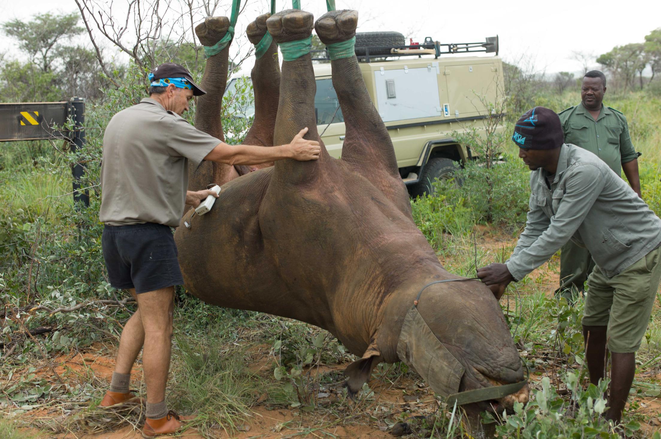 Upside-down rhino experiment wins Ig Nobel Prize