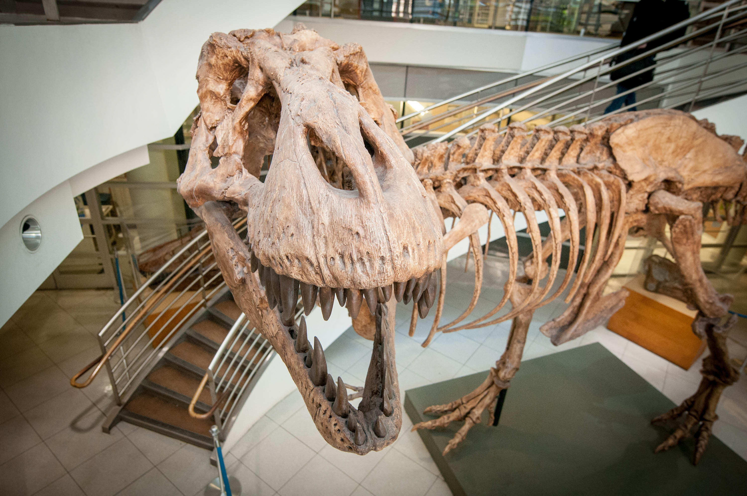Researchers now have an estimate for just how many T. rex once roamed Earth