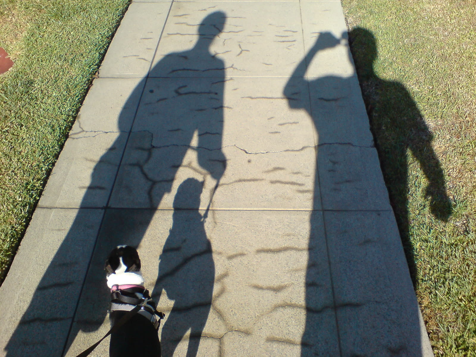 Out for a morning walk around the neighborhood with Rebecca and Lola.