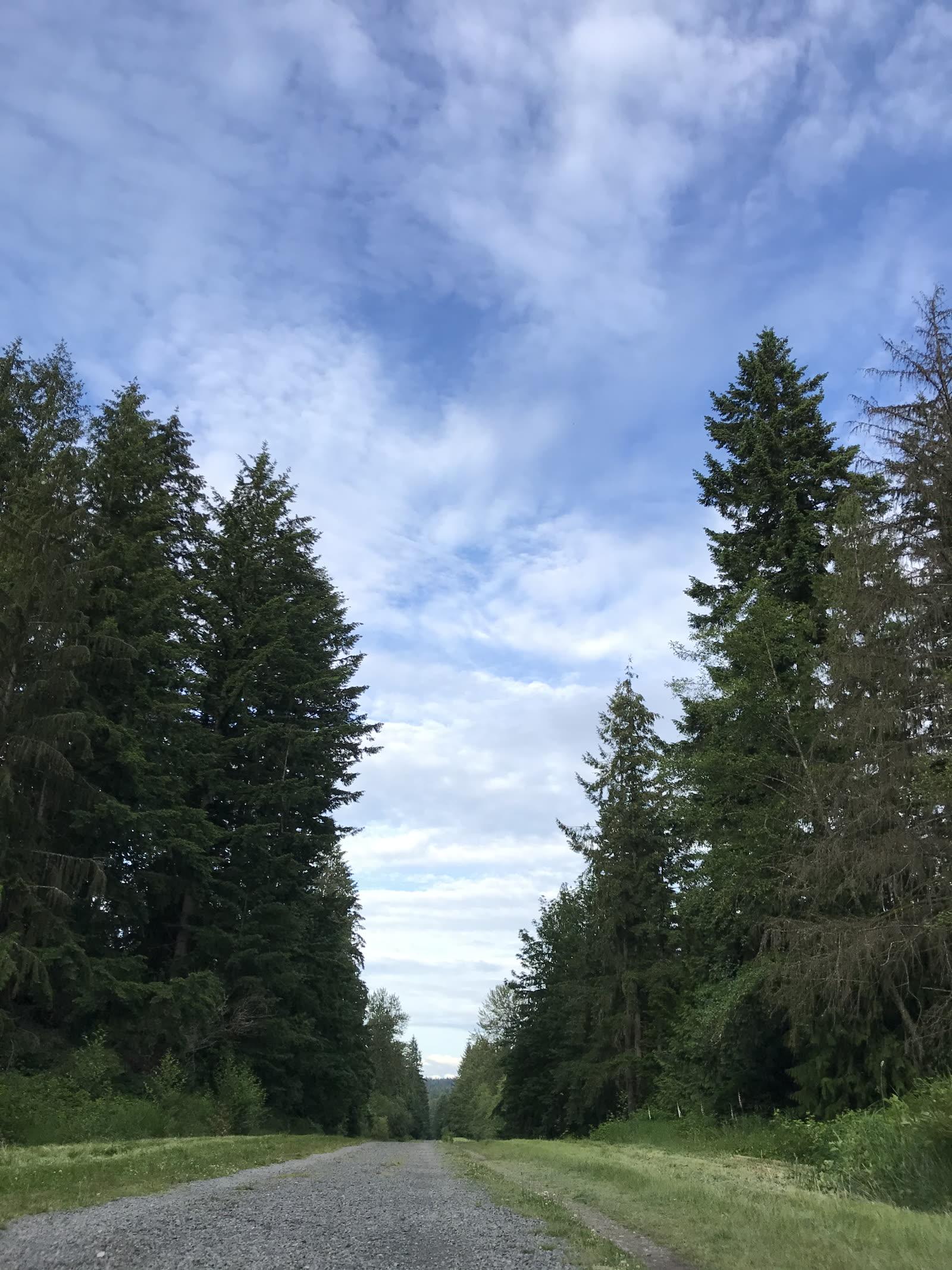Tolt Pipeline Trail