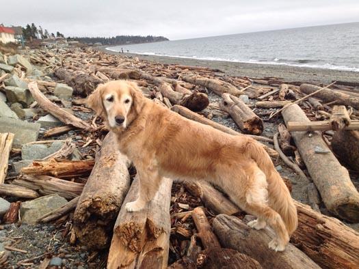 dog on logs