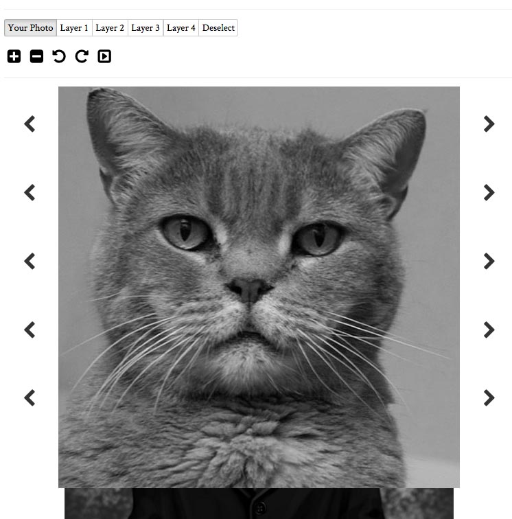 cat brought forward