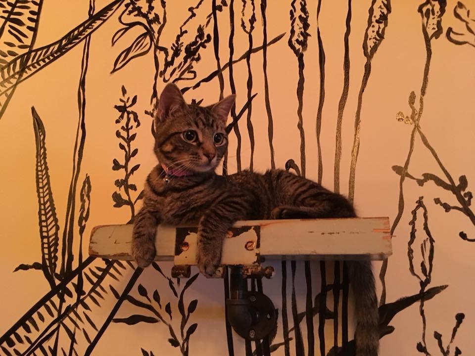 cat sitting samhain