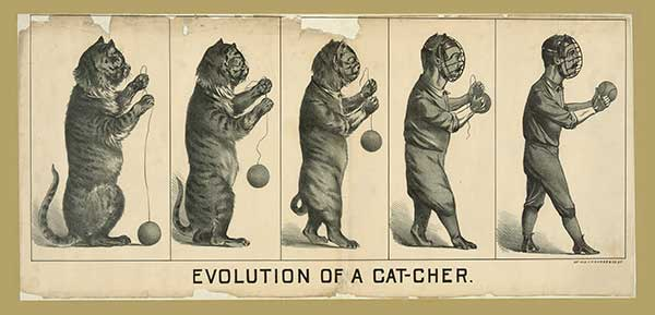 Image of Evolution of a Cat-cher