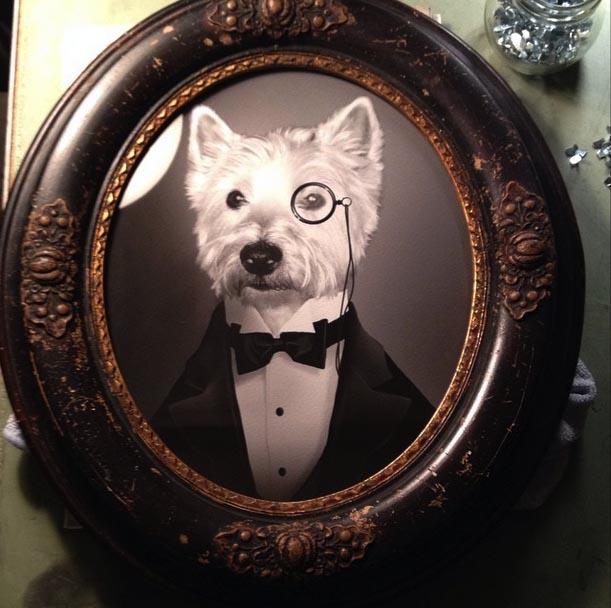 framed westie tuxedo