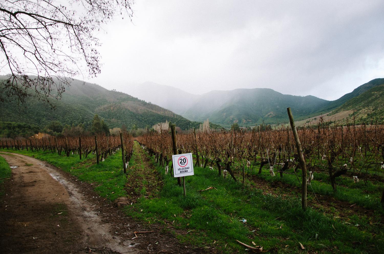 Colchagua Wine Region