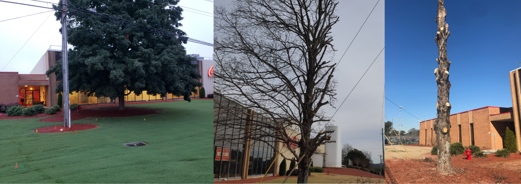 Marietta Coca-Cola, Wood iconic Coke Bottle, Ruth, rose maple tree before