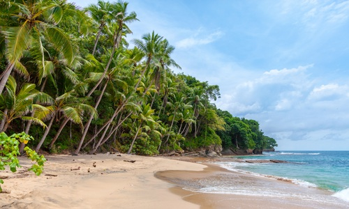 a tropical forest to the left meets with the beach and ocean to the right