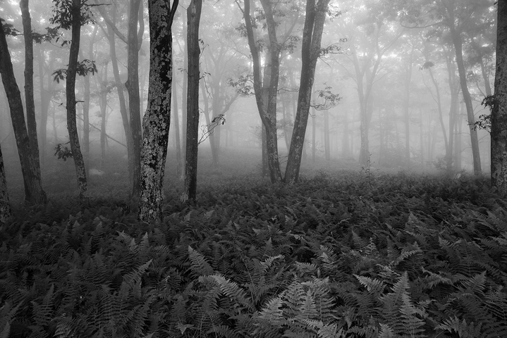 Shenandoah national park virginia fog and fern