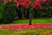 Red Leaves by Rick Kattelmann