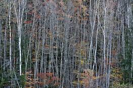 Amongst Trees by Sara V. Tabaei