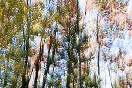 Autumn Impressions 1 by Sara V. Tabaei