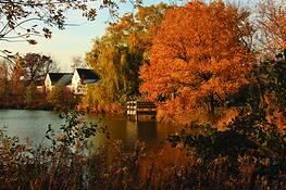 Suburban Wetland by Martin Steinhausen