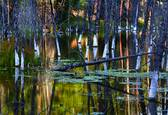 Pond Reflections by Susan Stone