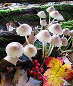 Fungi by Jan Wolyniak