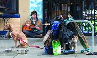 Boy with Guitar and Dogs by Lee Grossman