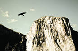 El Capitan and Bird by Mark Waits