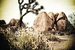 Tree and Rocks by Mark Waits