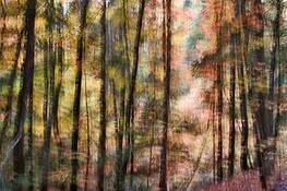 Autumn Rhythm 1 by Sara V. Tabaei