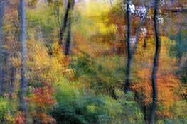 Autumn Rhythm 5 by Sara V. Tabaei