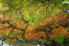 Autumn Shroud by Michael Elenko