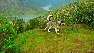 True Wolf 4 by Ellie Whitsett