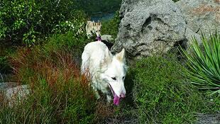 True Wolf 6 by Ellie Whitsett