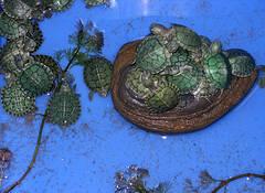 Turtle Pile by Rochelle Baker