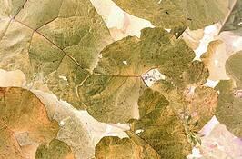 Leaves 2 by Bernt C. Skottun